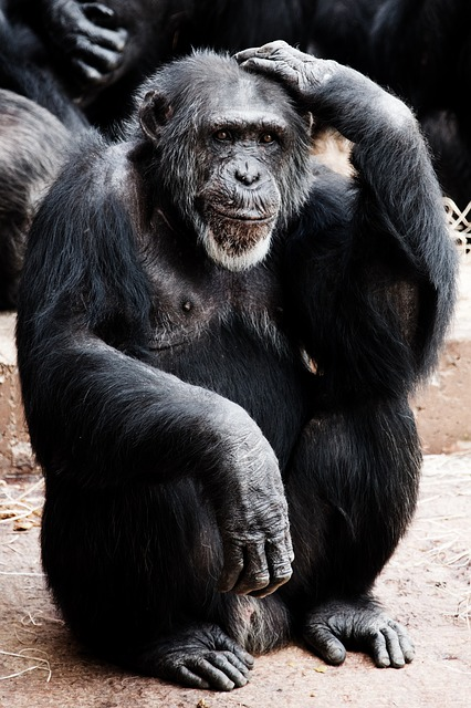 animal-17671_640