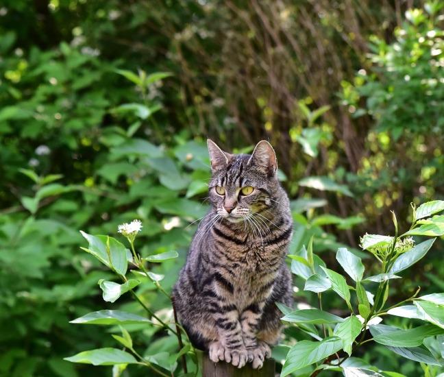cat-3414398_1920.jpg